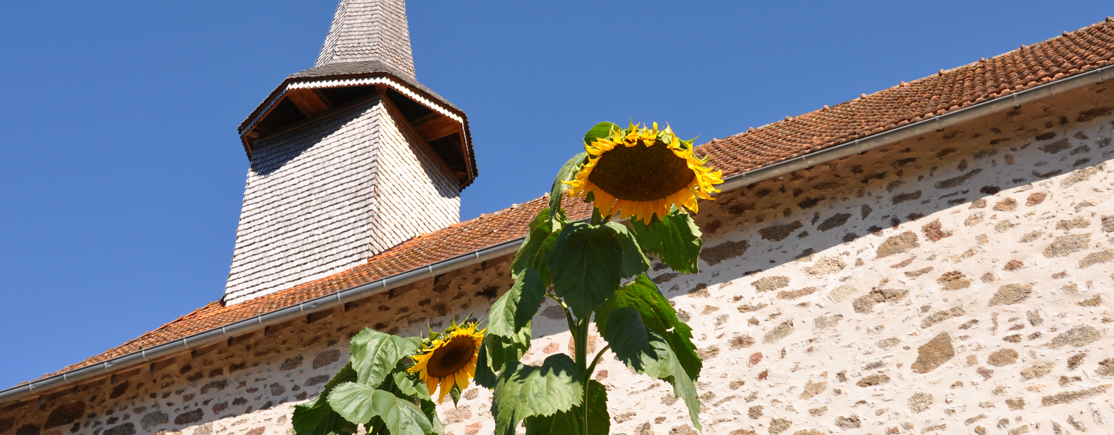 Sunflowers growing in front of church at Etang de Azat-Chatenet fishing lake in France