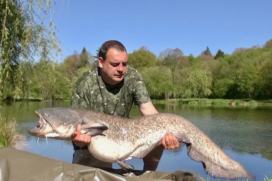 Catfish caught at Etang de Azat-Chatenet fishing lake in France